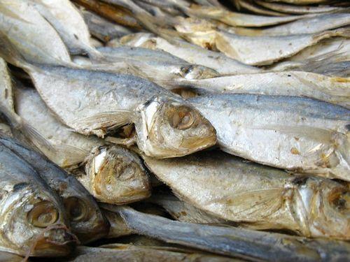 Yang Perlu Anda Ketahui Tentang Ikan Berlemak minyak ikan yang paling rendah